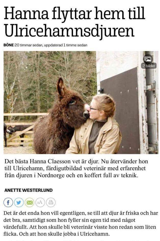 Bild på artikeln Hanna flyttar hem till Ulricehamnsdjuren