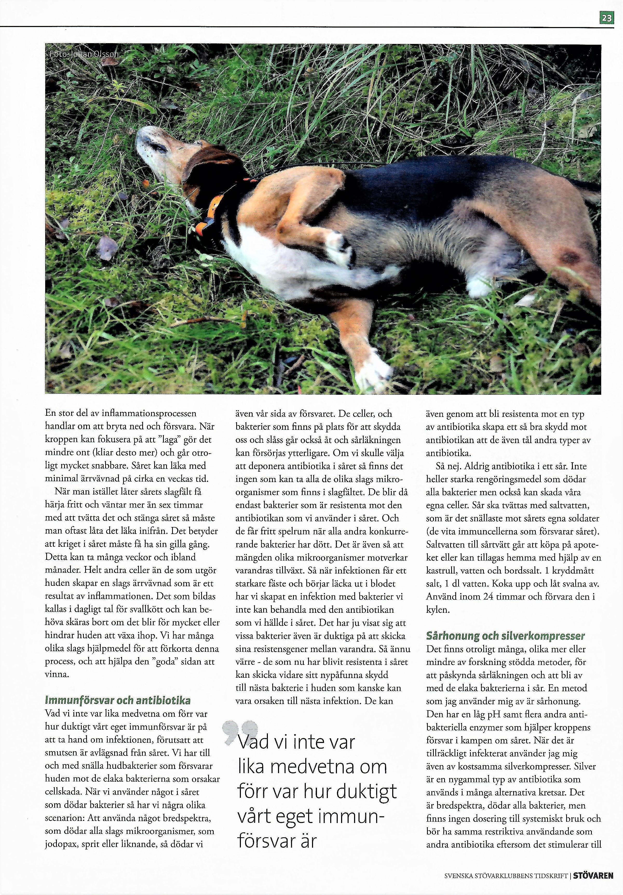 sida två om sår och sårvård i tidningen Stövaren